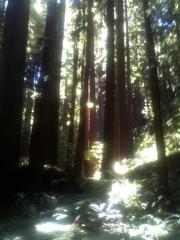 LMB_woods_aug2011b